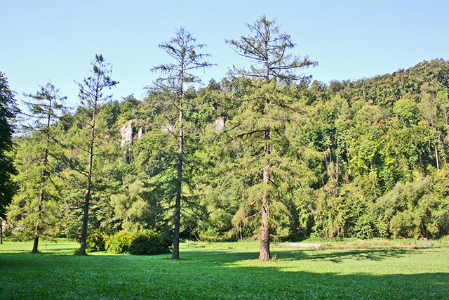 Árboles Valle Prądnik Parque Nacional Ojców Polonia