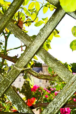 Enredadera y plantas flores de colores Castillo de Villandry Francia