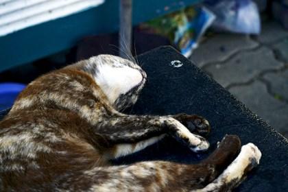 Gato calle durmiendo Bangkok