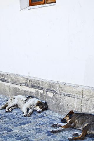 Perros abandonados Bucarest