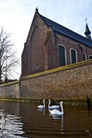 Canales cisnes Begijnhof Brujas