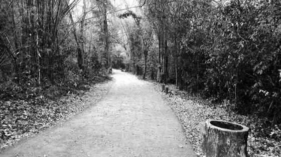 Sendero vegetación Parque Nacional de Erawan Tailandia blanco y negro