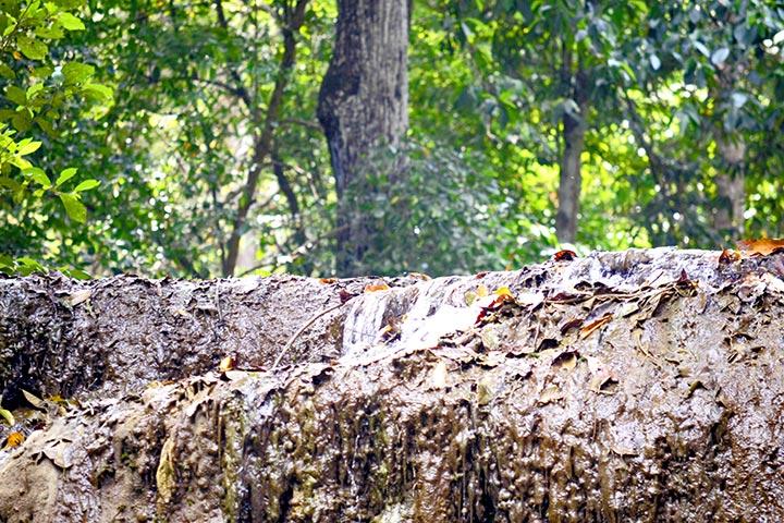 Hojas húmedas y vegetación Parque Nacional Erawan Tailandia