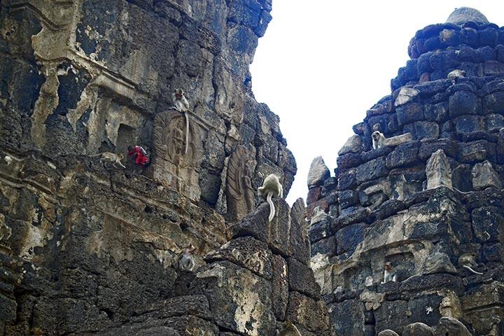 Monos escalando torres Prang Sam Yot Lopburi