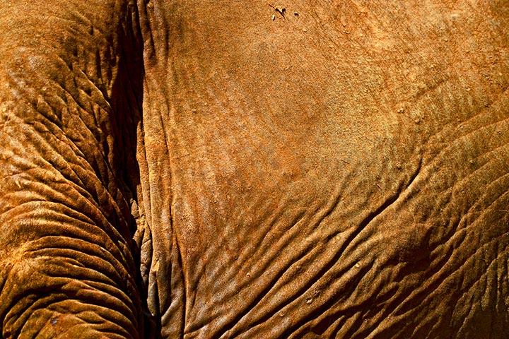 Piel texturas cuerpo elefante Elephant Nature Park Chiang Mai