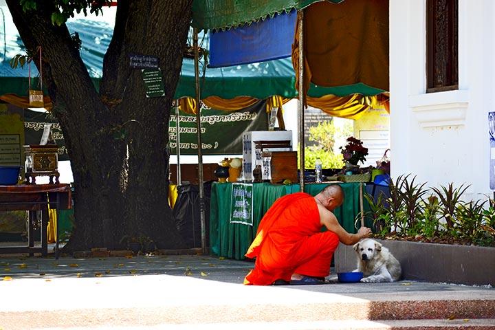 Monje benidición perro templo sagrado Lampang Tailandia