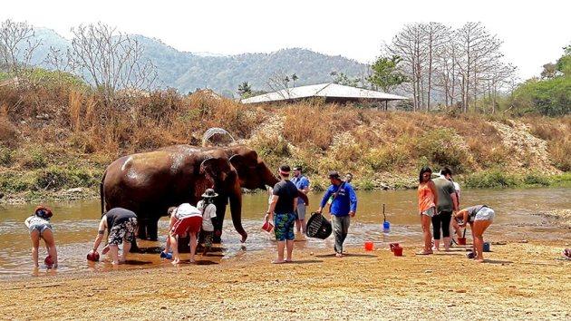 Cuidadores visitantes baño elefantes cubo agua Elephant Nature Park Chiang Mai