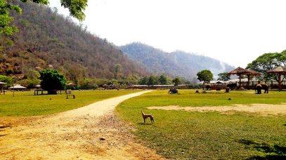 Instalaciones animales recuperados Elephant Nature Park Chiang Mai