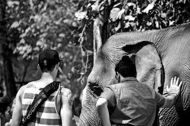 Turistas tocando elefante blanco y negro Elephant Nature Park Chiang Mai