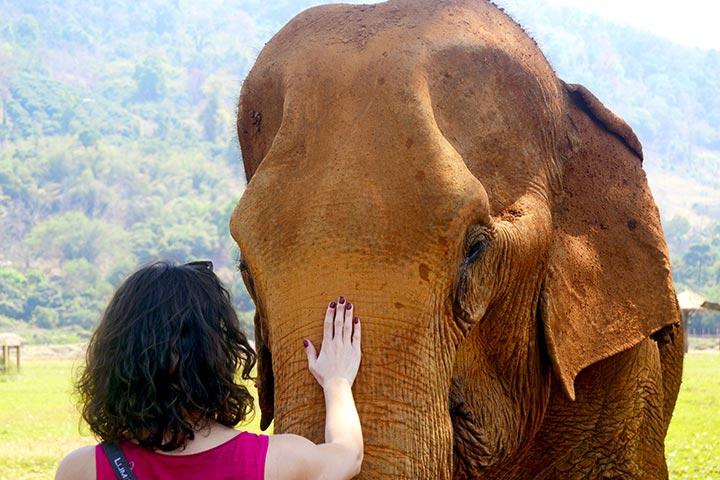 Turista toca elefante Elephant Nature Park Chiang Mai