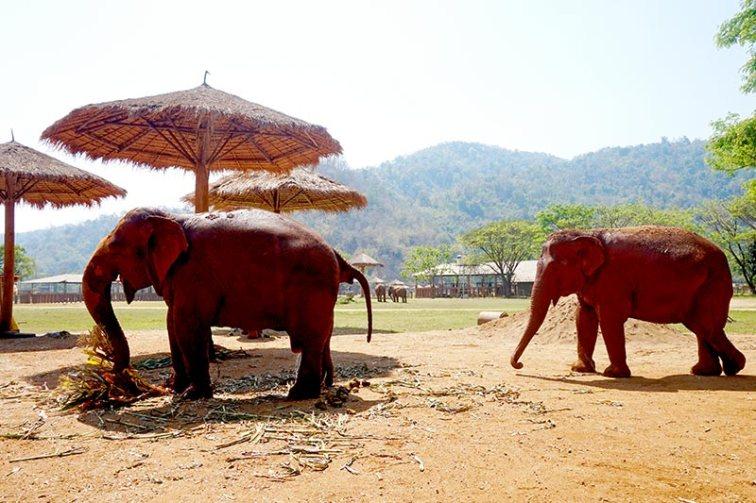Elefantes sol sombrilla Elephant Nature Park Chiang Mai