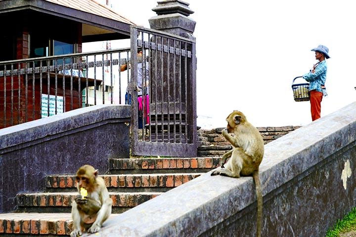 Monos vigilando comiendo cuidadores templo monos Lopburi