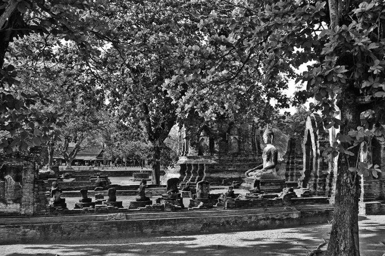 Vegetación jardines buda ruinas Ayutthaya blanco y negro