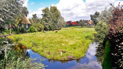 Césped ovejas y casas madera tradicionales región Zaanse Schans