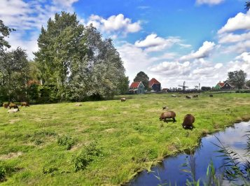 Ovejas prados pueblo histórico Zaanse Schans Holanda