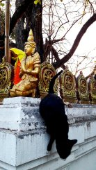 Gato bajando estatua buda pared calle centro histórico Chiang Mai