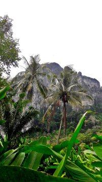 Montaña vegetación palmeras Krabi Tailandia