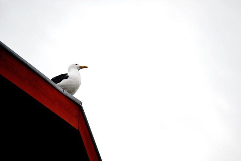 Gaviota mirando cielo tejado madera Fjaderholmarna Suecia