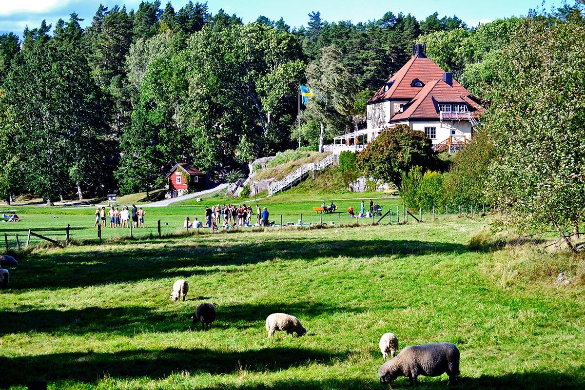 Vistas paisaje ovejas césped familias casa madera roja isla Grinda Suecia