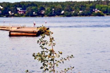Embarcadero madera aguas archipiélago Suecia