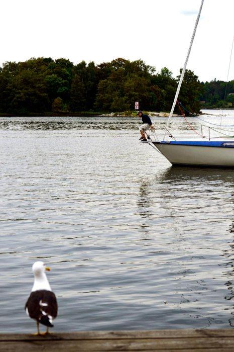 Gaviota mirando hombre saltar proa velero Suecia