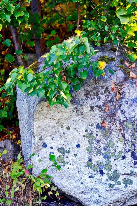 Roca milenaria plantas parque natural isla Grinda