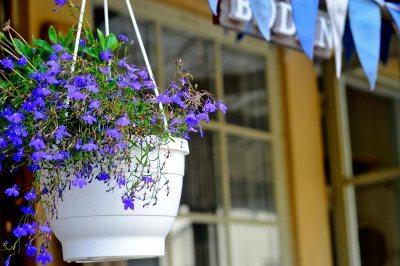 Maceta dalias lilas entrada vivienda sueca isla Fjaderholmarna Estocolmo
