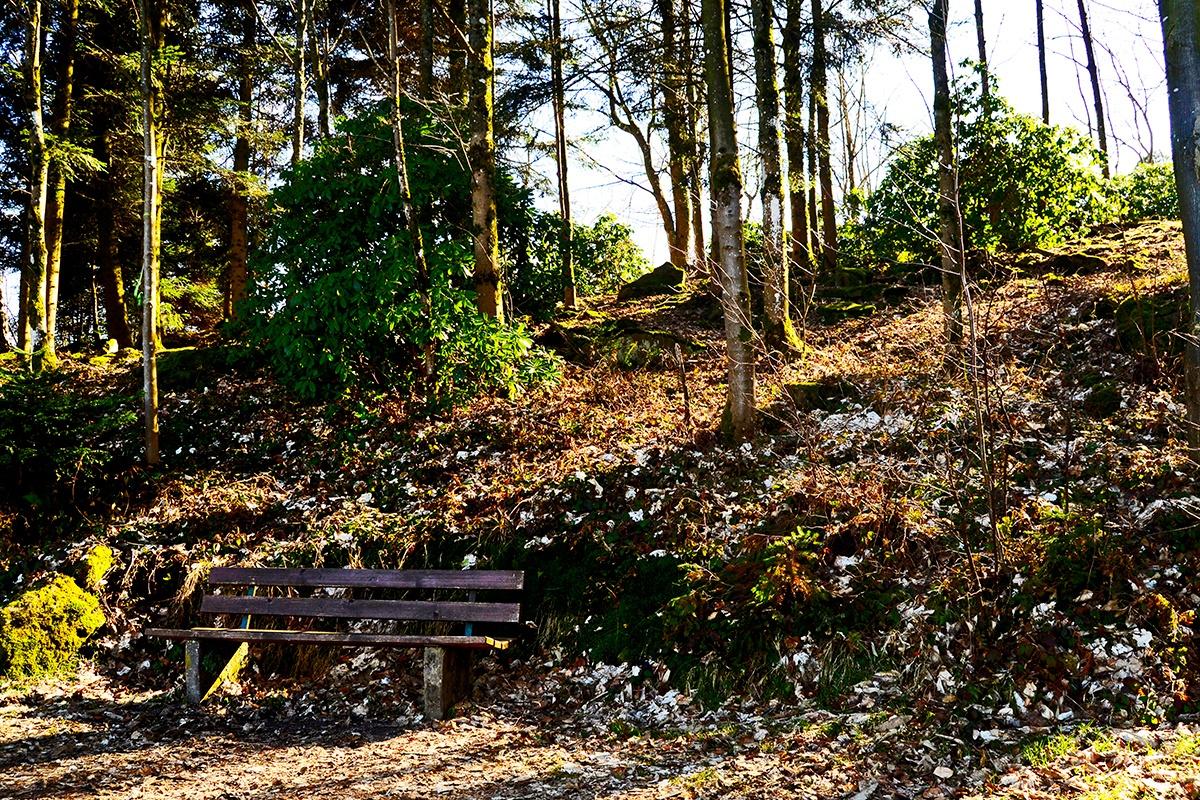 Banco bosques vegetación monte Merkur Baden Baden