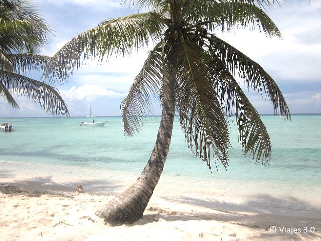Isla Saona Cocotero