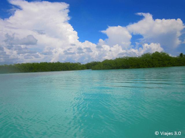 Isla Saona Manglar
