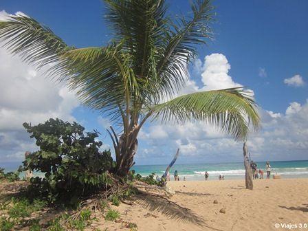 Excursión Buggy Playa Punta Cana