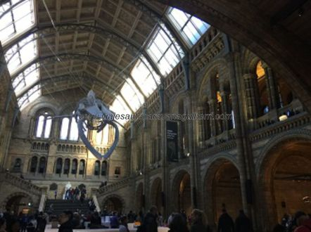 hall principal Museo Historia Natural