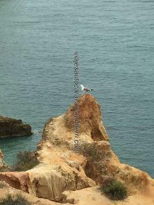 Marinha 21 Lisboa Algarve 201904