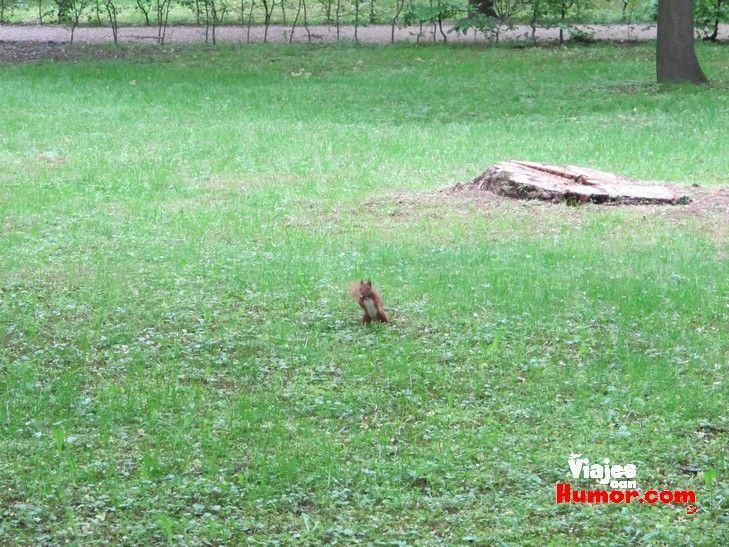 ardilla parque lazienki varsovia polonia