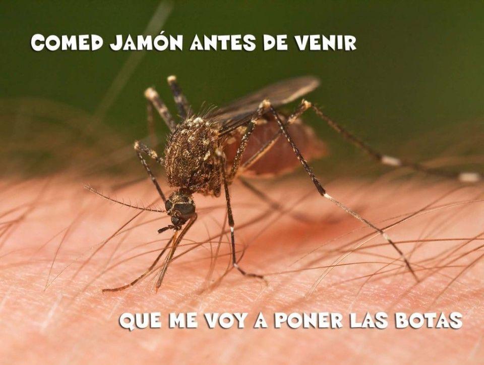 mosquitos tailandia
