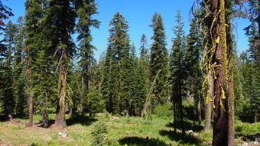 Habitat preferido por los juncos en la Sierra Nevada