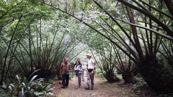 Helechos gigantes en el Jardin Botánico de Bogor.