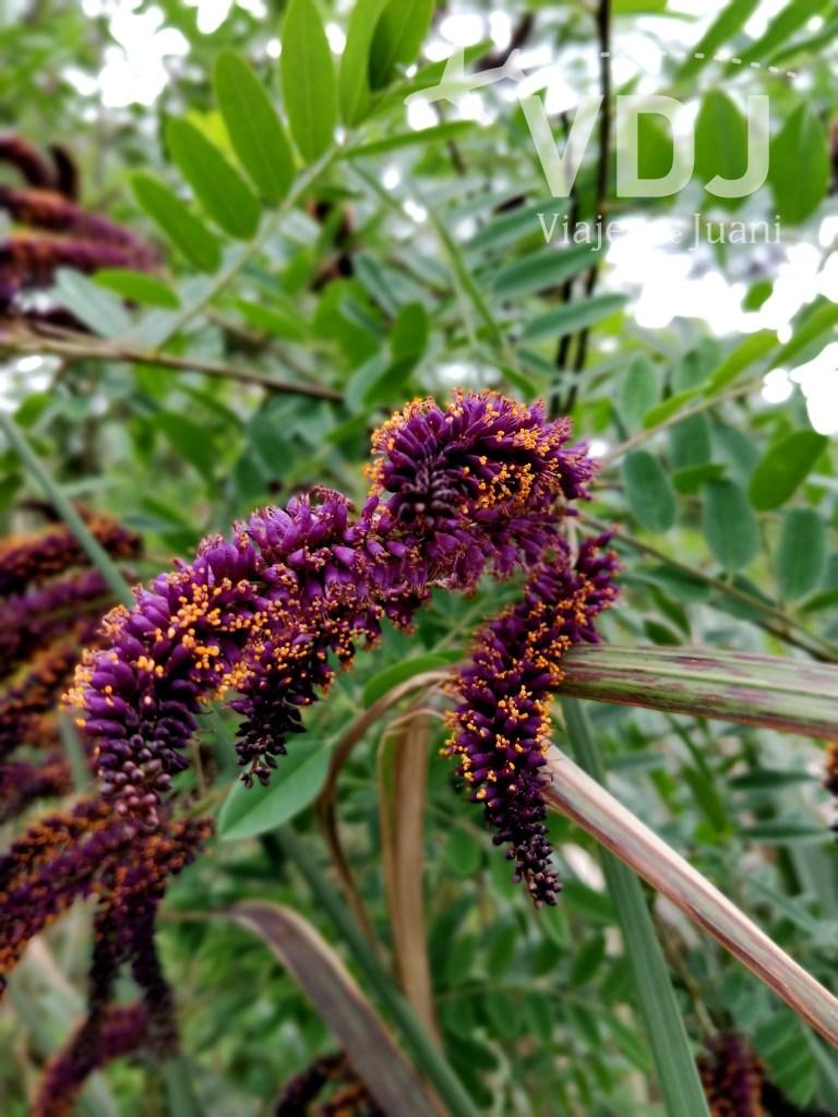 Flora de la reserva delta terra