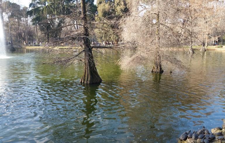 Parque del Retiro. Madrid (España)