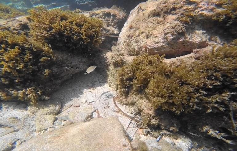 Snorkel en Methoni, en las aguas del Peloponeso (Grecia)