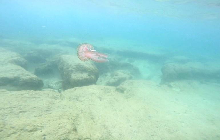 Snorkel Tropea, Calabria (Italia)