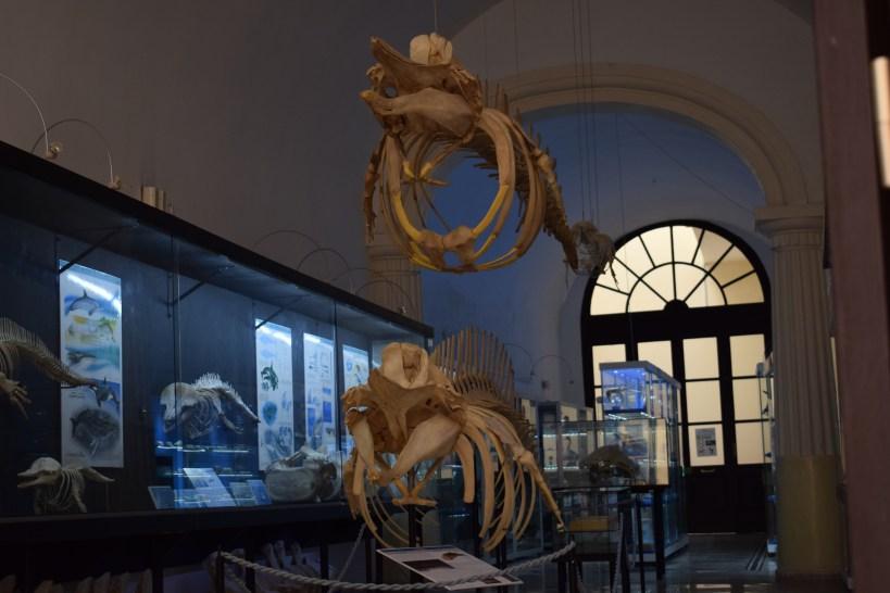 Museo Cívico, Gallipoli, Puglia (Italia)