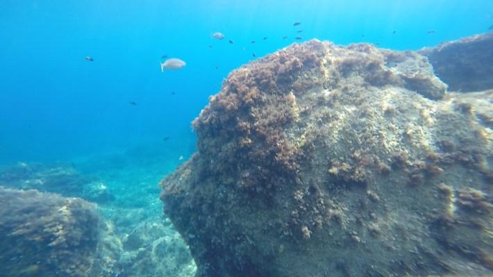 Snorkel en la R. N. dello Zingaro, Sicilia (Italia)
