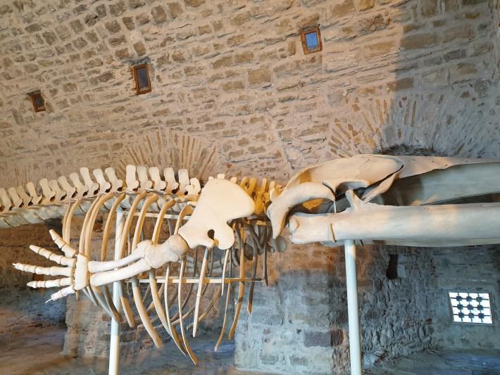 Esqueleto de ballena, en el interior del museo que se ubica en el casytillo, Kusadasi (Turquía)