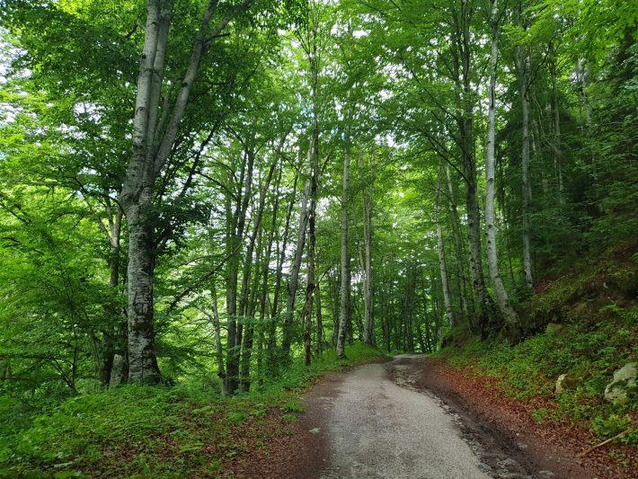 Carretera de acceso hacia nuestro camping en las cercanías del Monasterio de Rila (Bulgaria)