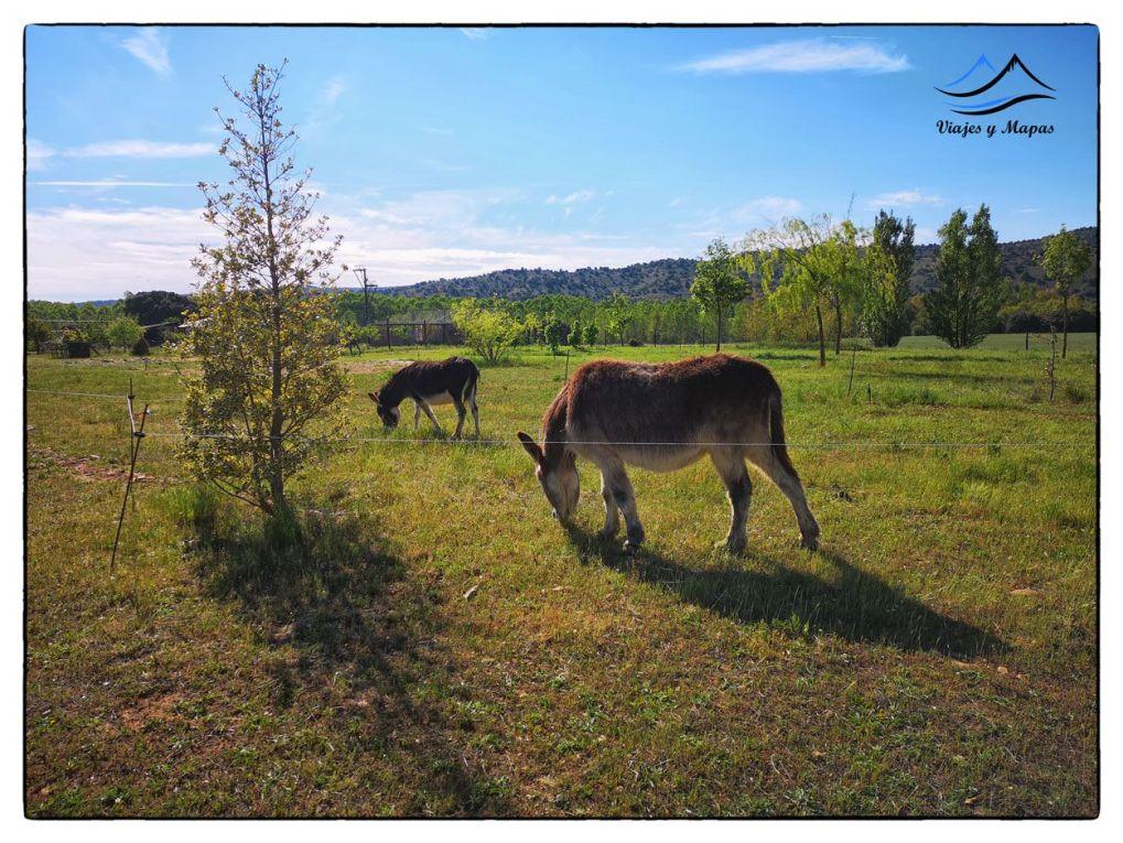 burros-sabinares