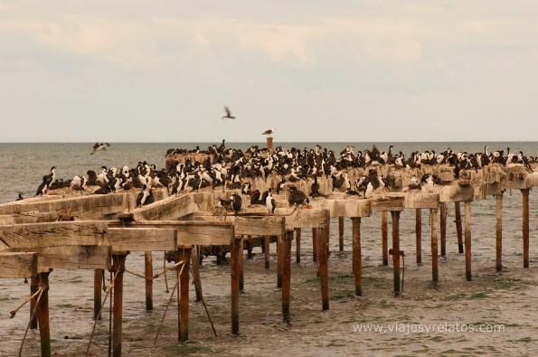 cormoranes-punta-arenas