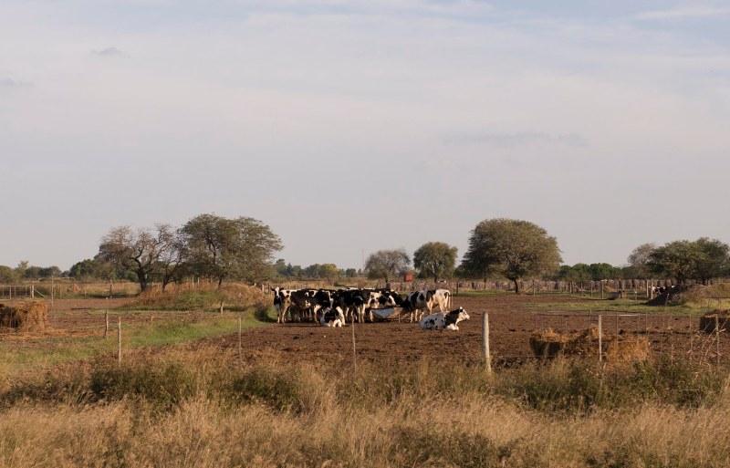 Zona tambera - Ruta de la leche - imagen de @LauraSchne