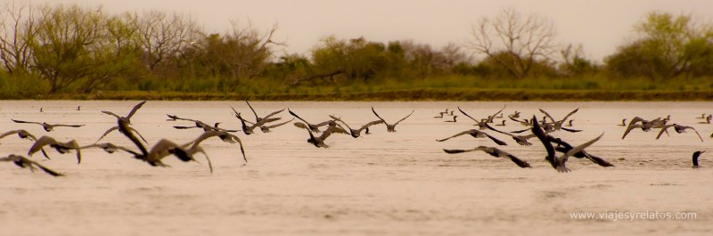 Corrientes-aves-mas