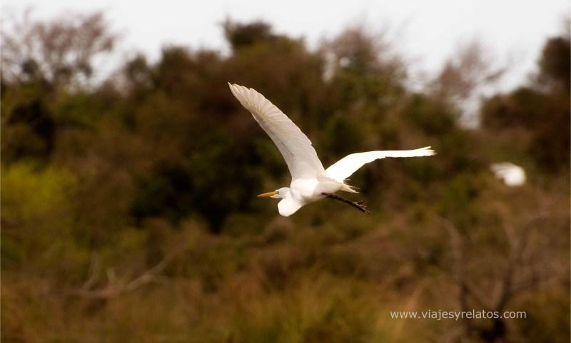 avistaje-de-aves-corrientes
